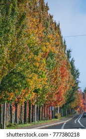 View of the colorful trees and empty roads