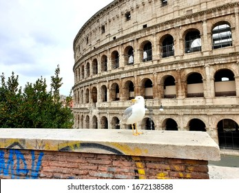 View of the Colosseum without tourists due to the quarantine, only a seagull