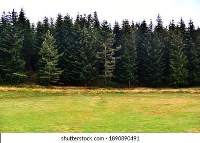 View of the coniferous and fir woods at the Pratizzano pass in the park of the Tuscan-Emilian Apennines, Pratizzano, Ramiseto, Reggio Emilia, Emilia Romagna, Italy