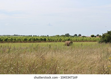 A view of the countryside in France. There are a haystack and vineyard in the background