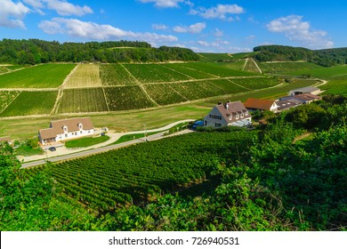 View of countryside and vineyards in Chablis area, Burgundy, France