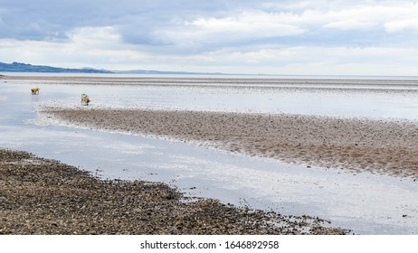 A view from Cramond Island of Cramond Beach at low tide and its surrounding nature close to Edinburgh, Scotland, United Kingdom.