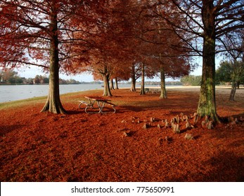 View of Cypress trees with red leaves at University Lake, Baton Rouge, Louisiana, USA
