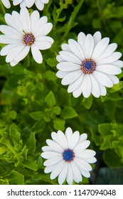 View of daisy