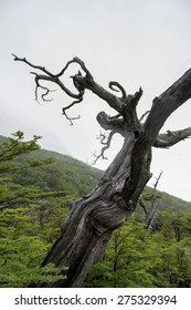 View of a dead tree, French Valley, Torres del Paine National Park, Patagonia, Chile