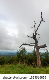 View of a dead tree trunk on top of a hill in blue ridge mountain range overlooking the scenery in Shenandoah Valley on a cloudy day. Image was shot at a high altitude scenic overlook by skyline drive