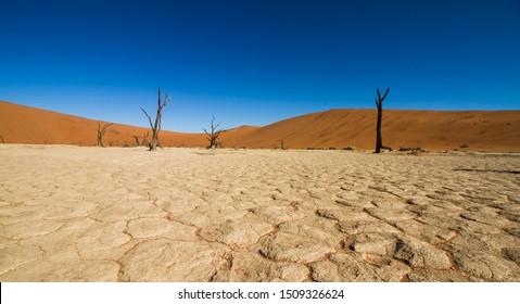 View of dead vlei, a dried out valley filled with ancient dead trees at Sossusvlei, Namib desert, Namibia
