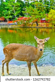 View of deer roaming in Nara Park in autumn in Nara, Japan.