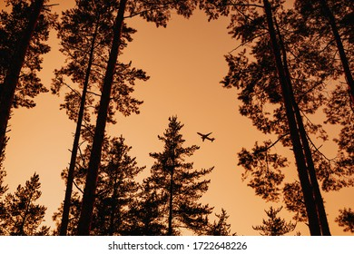 A view of a departing airplane among the trees against the background of the evening sky - Shutterstock ID 1722648226