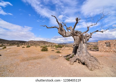 View of the Desert Tabernas in Almeria Province Spain