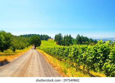 View of a dirt road passing through a vineyard in rural Oregon
