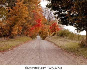 View of a dirt road with trees on the side during fall.