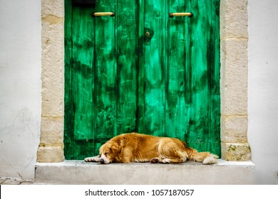 View of a dog resting in front of a green door