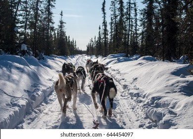 view from dog sled and sled dog team in Alaska
