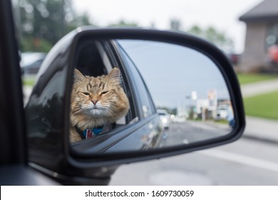 View of domestic cat from rearview mirror