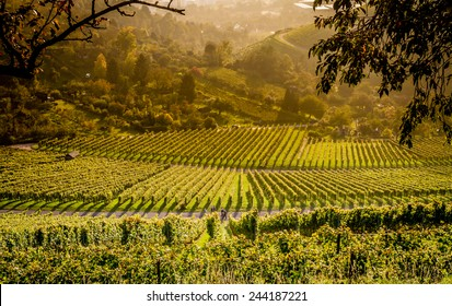 View down the idyllic vineyards and fruit orchards of Stuttgart-Rotenberg (Germany)