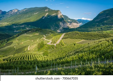 View down the idyllic vineyards and fruit orchards of Trentino Alto Adige, Italy. Val di Non, a vast fruit orchard in the heart of north - western Trentino, Italy. Trentino Alto Adige hills