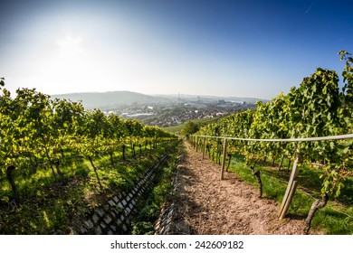 View down a vineyard with the City of Stuttgart in the background