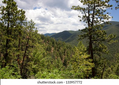 View downhill through a forest into a green canyon