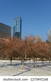View of downtown Chicago with tall buildings and trees