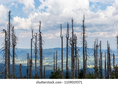 View to Dreisessel, Trojmezi and Trojmezna hills with forests destroyed by bark beetle infestation (calamity) in Sumava mountains.