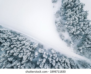 View from the drone on snow-covered fir trees, the car in the forest field. Beautiful winter snow landscape