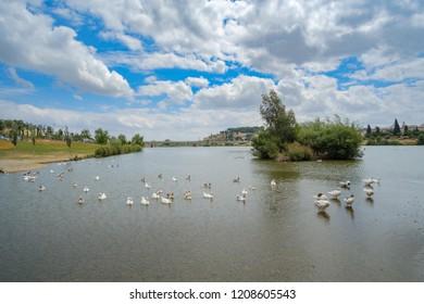 View of the ducks that inhabit the Guadiana river from the bridge of Palmas in Badajoz, Extremadura, Spain
