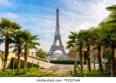 View of the Eiffel Tower from the Trocadero gardens with palm trees in the foreground by a sunny winter afternoon.