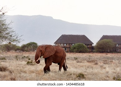 View of elephant and herd of zebras in African safari with dry grass and trees on savanna, with lodge in background