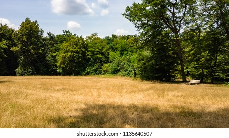 View of an empty area in the middle of a forest along with a seat