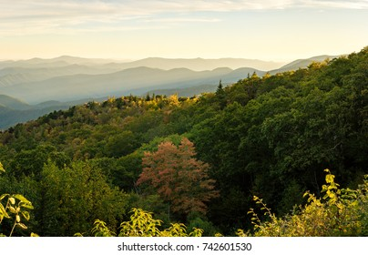 A view of the endless mountain ridges in the distance as the leaves are starting to turn colors for the fall in the Blue Ridge Mountains of North Carolina.