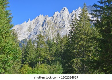 View of the Engelhorn mountains above Grindlewald in the Bernese Alps, Switzerland framed by pine trees