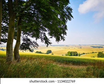 View of English Countryside Landscape Field on Summer
