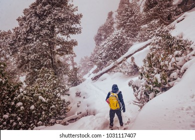 View enroute to Triund hiking trail after heavy snowfall in winter at Mcleod ganj, Dharamsala, Himachal Pradesh, India. Triund hill top offers view of snowcladded himalyan peaks of Dhauladhar range.