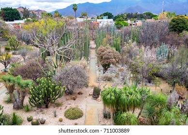 View of the ethnobotanical garden in Oaxaca, Mexico