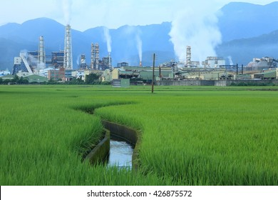 View of a factory in the middle of a green rice farm in the early morning ~ Factory pipes polluting air in a silent morning, a serious environmental issue