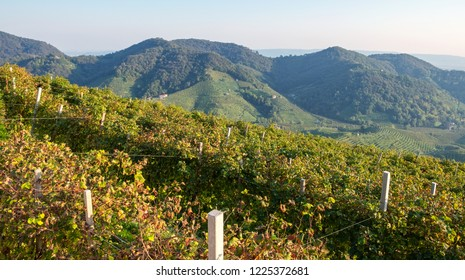 View in the fall season of the world famous Prosecco vineyards, in the hilly area of Valdobbiadene (Veneto Region, Northern Italy).