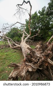 View of a fallen tree - Shutterstock ID 2010986873