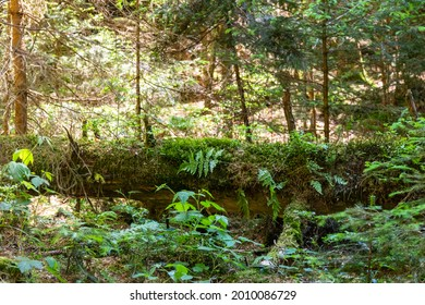 view of a fallen trunk overgrown with moss and plants in a dense forest