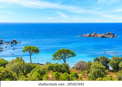 View of famous Palombaggia beach with pine trees and azure sea, Corsica island, France