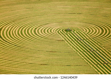 A view of a farm field with hay cut and windrowed in a circular pattern for drying.