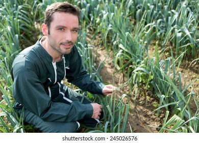 VIew of a Farmer working in a leek field