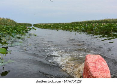 View of the field of blooming pink Lotus (Nelumbo nucifera) from a floating motor boat. The Delta of the Volga river, Russia
