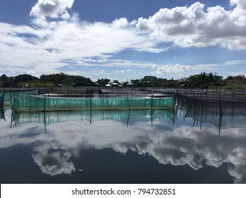 A view of fish pond with green nets in a bright partially cloudy noon. The sky is reflected in the quiet waters of the pond.