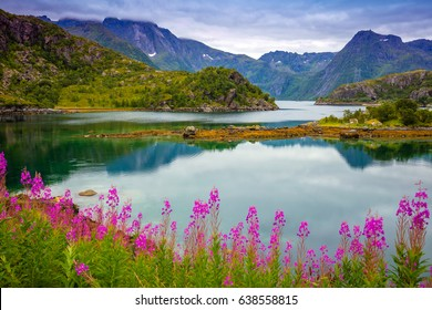 View of the fjord. Rocky sea shore with reflection, blue cloudy sky and blossoming pink flowers. Beautiful nature Norway.