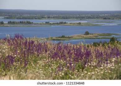 View of the flood of the river through a flowering field.