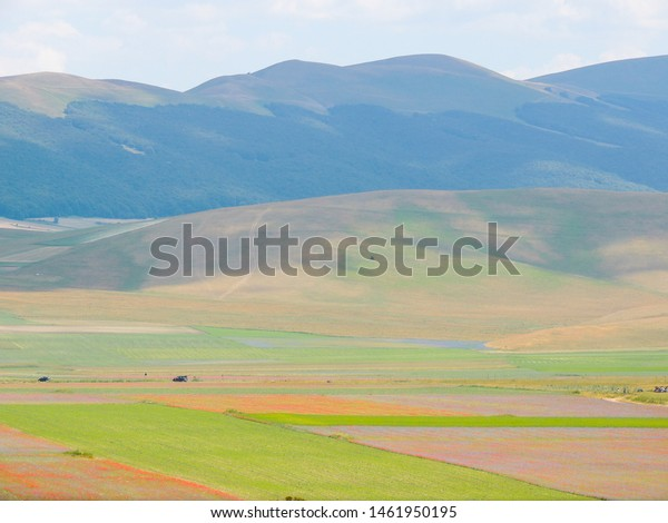 view-flowering-fields-lentils-castellucc