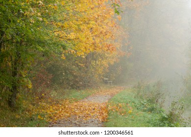 View in the fog over a pathway with autumn leaves on a stream on a resting bench