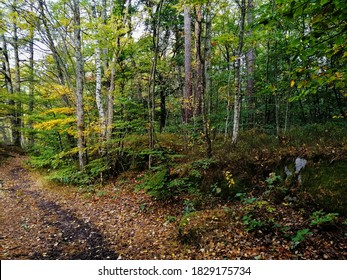 A view of footpath along with trees and plants in a forest at Larvik, Norway