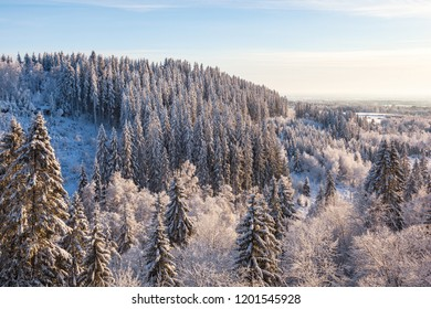 View of the forest landscape in winter